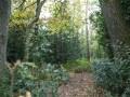 Buchen-Eichenwälder mit Stechpalme
