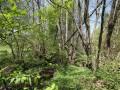 Hainsternmieren-Erlen-Auwälder