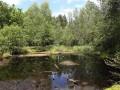 Huminsäurereiche Seen und Teiche