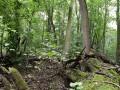 Hartholzauewälder