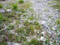 Kalkschschutthalden der Alpen