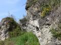 Kalkfelsen mit Felsspaltenvegetation