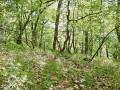 Labkraut-Eichen-Hainbuchenwald