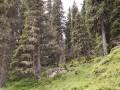 Fichtenwälder der hohen Mittelgebirge und Alpen