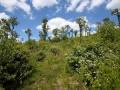 Niederwälder