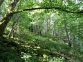 Schlucht- und Hang-Blockschuttwälder