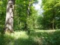 Sternmieren-Eichen-Hainbuchenwald