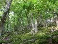 Trockenwarme Traubeneichenwälder
