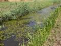 Wasserführende Wiesengräben