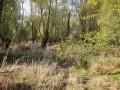 Weiden Auwälder