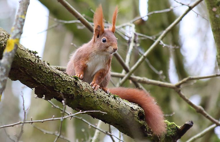 Feuchte Eichhörnchen Heißer lesbischer Fußfetisch-Porno